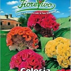 Σελόζια - ανάμεικτα χρώματα πακέτο σπόρων 1γραμ.