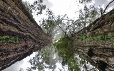 Σεκόγια - Το μεγαλύτερο δέντρο του κόσμου!