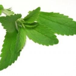 Στέβια (Stevia Rebaudiana) 25 Σπόροι Στέβιας