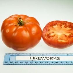 Ντομάτα Fireworks - 15 Σπόροι