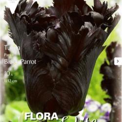 Μαύρη Τουλίπα Black Parrot - 10 Βολβοί