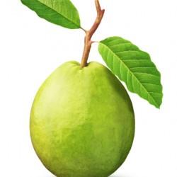 Γκουάβα (Psidium Guajava) 15 Σπόροι