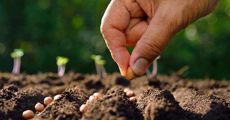 ανοιξιατικη καλλιεργεια, τι φυτεύουμε ανοιξη