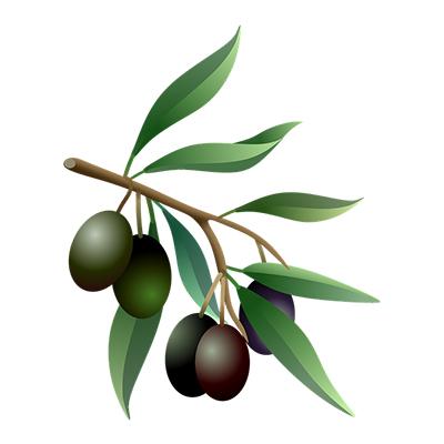 elia bonsai ελια μπονσαι