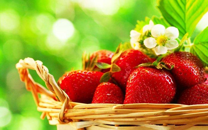 φράουλες καλλιέργεια αγορά σπόρων και ριζωμάτων