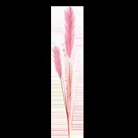 γυνέριο φυτό αγορά