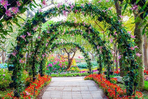 καλλωπιστικά φυτά εξωτερικού χώρου