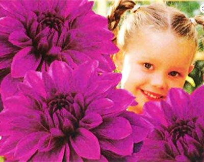 λουλουδια για φυτεμα ανοιξη κηπο μπαλκόνι