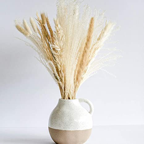pampas grass αγορά γυνέριο