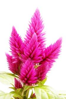 Σελόζια για φύτεμα την άνοιξη στην γλάστρα και στον κήπο