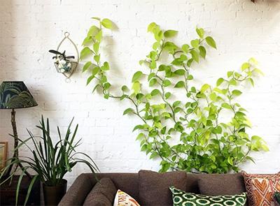 καλλωπιστικα φυτα εσωτερικού χώρου